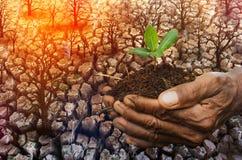 Παγκόσμια αύξηση της θερμοκρασίας λόγω του φαινομένου του θερμοκηπίου, κλιματική αλλαγή, καυτός καιρός, ξηρά γη, νέα ζωή Στοκ Εικόνες