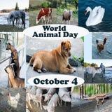 Παγκόσμια ζωική ημέρα διαφορετικά ζώα από κοινού Στοκ Εικόνα