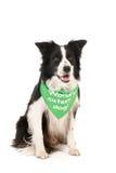 Παγκόσμιο πιό χαριτωμένο σκυλί κόλλεϊ συνόρων Στοκ εικόνα με δικαίωμα ελεύθερης χρήσης