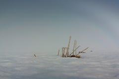 Παγωμένα άχυρα μια ημέρα της Misty Στοκ φωτογραφίες με δικαίωμα ελεύθερης χρήσης