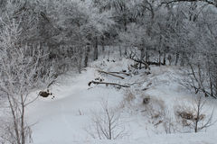 Παγωμένα δέντρα γύρω από τον παγωμένο ποταμό κάτω από το χιόνι Στοκ Φωτογραφία