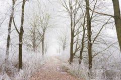 Παγωμένα δέντρα με το μικρό τρόπο Στοκ Εικόνες