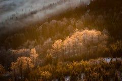 Παγωμένα δέντρα στην κοιλάδα Στοκ Φωτογραφία