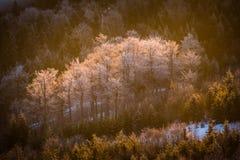Παγωμένα δέντρα στην κοιλάδα Στοκ εικόνα με δικαίωμα ελεύθερης χρήσης