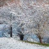 Παγωμένα δέντρα στο χειμερινό δάσος Στοκ Φωτογραφίες