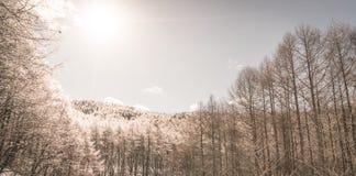 Παγωμένα δέντρα το χειμώνα με το μπλε ουρανό (φιλτραρισμένη εικόνα επεξεργασμένη Στοκ φωτογραφίες με δικαίωμα ελεύθερης χρήσης