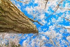 Παγωμένα δέντρα το χειμώνα με το μπλε ουρανό Στοκ εικόνες με δικαίωμα ελεύθερης χρήσης