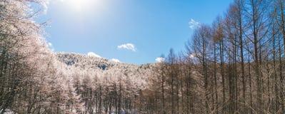 Παγωμένα δέντρα το χειμώνα με το μπλε ουρανό Στοκ φωτογραφία με δικαίωμα ελεύθερης χρήσης