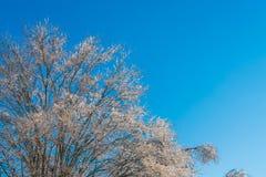 Παγωμένα δέντρα το χειμώνα με το μπλε ουρανό Στοκ φωτογραφίες με δικαίωμα ελεύθερης χρήσης