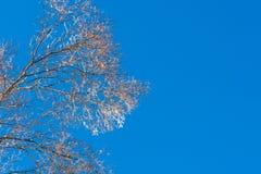 Παγωμένα δέντρα το χειμώνα με το μπλε ουρανό Στοκ Εικόνες