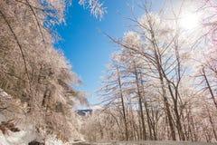Παγωμένα δέντρα το χειμώνα με το μπλε ουρανό Στοκ εικόνα με δικαίωμα ελεύθερης χρήσης