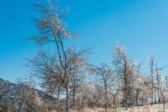 Παγωμένα δέντρα το χειμώνα με το μπλε ουρανό Στοκ Εικόνα