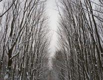 παγωμένα δέντρα εικόνων Στοκ φωτογραφία με δικαίωμα ελεύθερης χρήσης