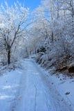 Παγωμένα δέντρα και μια πορεία Στοκ Εικόνες