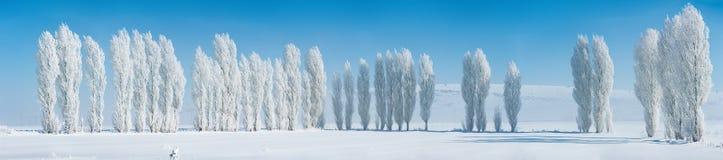 Παγωμένα δέντρα λευκών Στοκ φωτογραφία με δικαίωμα ελεύθερης χρήσης