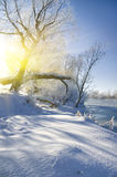 παγωμένα δέντρα ποταμών στοκ φωτογραφία με δικαίωμα ελεύθερης χρήσης