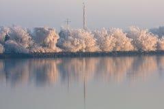 Παγωμένα δέντρα που απεικονίζονται στον ποταμό Στοκ Εικόνες