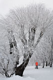 παγωμένα δέντρα στοκ εικόνα