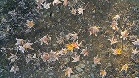 Παγωμένα ζωηρόχρωμα πεσμένα φύλλα κάτω από το πρώτο χιόνι στην πορεία ασφάλτου το φθινόπωρο Στοκ φωτογραφία με δικαίωμα ελεύθερης χρήσης