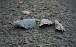 Παγωμένα κατσαρωμένα φύλλα που βάζουν τις πέτρες που καλύπτονται με τα κρύσταλλα πάγου στοκ εικόνες