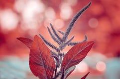 Παγωμένα κόκκινα Στοκ εικόνα με δικαίωμα ελεύθερης χρήσης