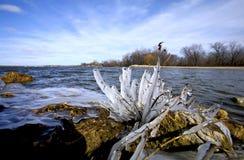παγωμένα κύματα στοκ φωτογραφία με δικαίωμα ελεύθερης χρήσης
