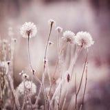 Παγωμένα λουλούδια, εγκαταστάσεις παγωμένος χειμώνας χιονοπτώσεων φύσης πρωινού Στοκ Φωτογραφία