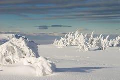 παγωμένα πεύκα Στοκ εικόνες με δικαίωμα ελεύθερης χρήσης