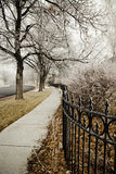 Παγωμένα πρωί δέντρα Στοκ Φωτογραφίες
