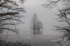 Παγωμένα φαλακρά δέντρα κυπαρισσιών που πλαισιώνονται από τους κλάδους Στοκ φωτογραφία με δικαίωμα ελεύθερης χρήσης