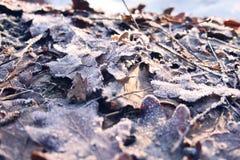 Παγωμένα φύλλα από τον ωκεανό στο wintertime Στοκ εικόνα με δικαίωμα ελεύθερης χρήσης