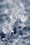 παγωμένα φύλλα φθινοπώρο&upsilon Στοκ εικόνες με δικαίωμα ελεύθερης χρήσης