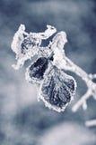παγωμένα φύλλα φθινοπώρο&upsilon Στοκ εικόνα με δικαίωμα ελεύθερης χρήσης