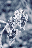 παγωμένα φύλλα φθινοπώρο&upsilon Στοκ Φωτογραφίες