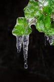 Παγωμένα φύλλα, φύλλο με τη δαντέλλα πάγου Στοκ φωτογραφία με δικαίωμα ελεύθερης χρήσης