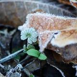παγωμένα φύλλα Στοκ φωτογραφίες με δικαίωμα ελεύθερης χρήσης