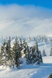 Παγωμένα χιονώδη δέντρα έλατου στο χειμερινό λόφο Στοκ εικόνες με δικαίωμα ελεύθερης χρήσης