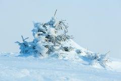 Παγωμένα χιονώδη δέντρα έλατου στο χειμερινό λόφο Στοκ Εικόνες