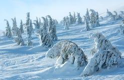 Παγωμένα χιονώδη δέντρα έλατου στο χειμερινό λόφο Στοκ εικόνα με δικαίωμα ελεύθερης χρήσης