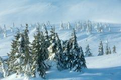 Παγωμένα χιονώδη δέντρα έλατου στο χειμερινό λόφο Στοκ Φωτογραφίες