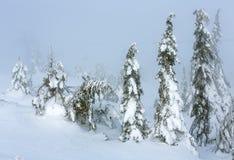 Παγωμένα χιονώδη δέντρα έλατου στο χειμερινό misty λόφο Στοκ Φωτογραφία