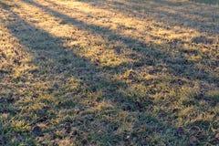 Παγωμένα χλόη και φύλλα των δέντρων στον ήλιο πρωινού Παγωμένο, ηλιόλουστο πρωί στοκ φωτογραφίες με δικαίωμα ελεύθερης χρήσης