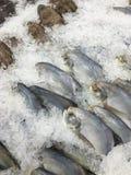 Παγωμένα (Pomfret) ψάρια Στοκ Εικόνες