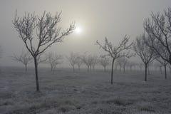 Παγωμένες δέντρα και ομίχλη Στοκ Φωτογραφίες