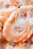 παγωμένες γαρίδες πάγου Μακροεντολή Στοκ φωτογραφία με δικαίωμα ελεύθερης χρήσης