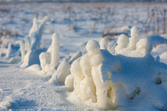Παγωμένες εγκαταστάσεις στο χιονώδη τομέα Στοκ Εικόνες