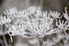Παγωμένες λεπίδες της χλόης, παγωμένη λεπίδα της χλόης Στοκ φωτογραφία με δικαίωμα ελεύθερης χρήσης