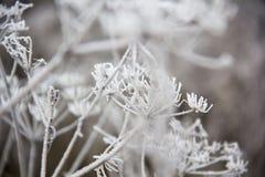 Παγωμένες λεπίδες της χλόης, παγωμένη λεπίδα της χλόης Στοκ Φωτογραφίες