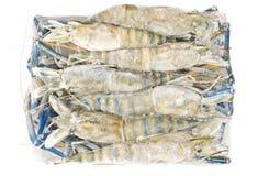 παγωμένες ομάδα δεδομένων γαρίδες Στοκ Εικόνες