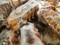Παγωμένες ουρές αστακών στοκ εικόνες